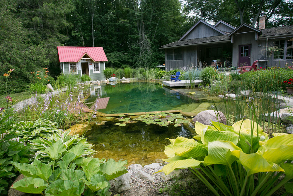 How Do Natural Swimming Pools Work Passion Pool Pond