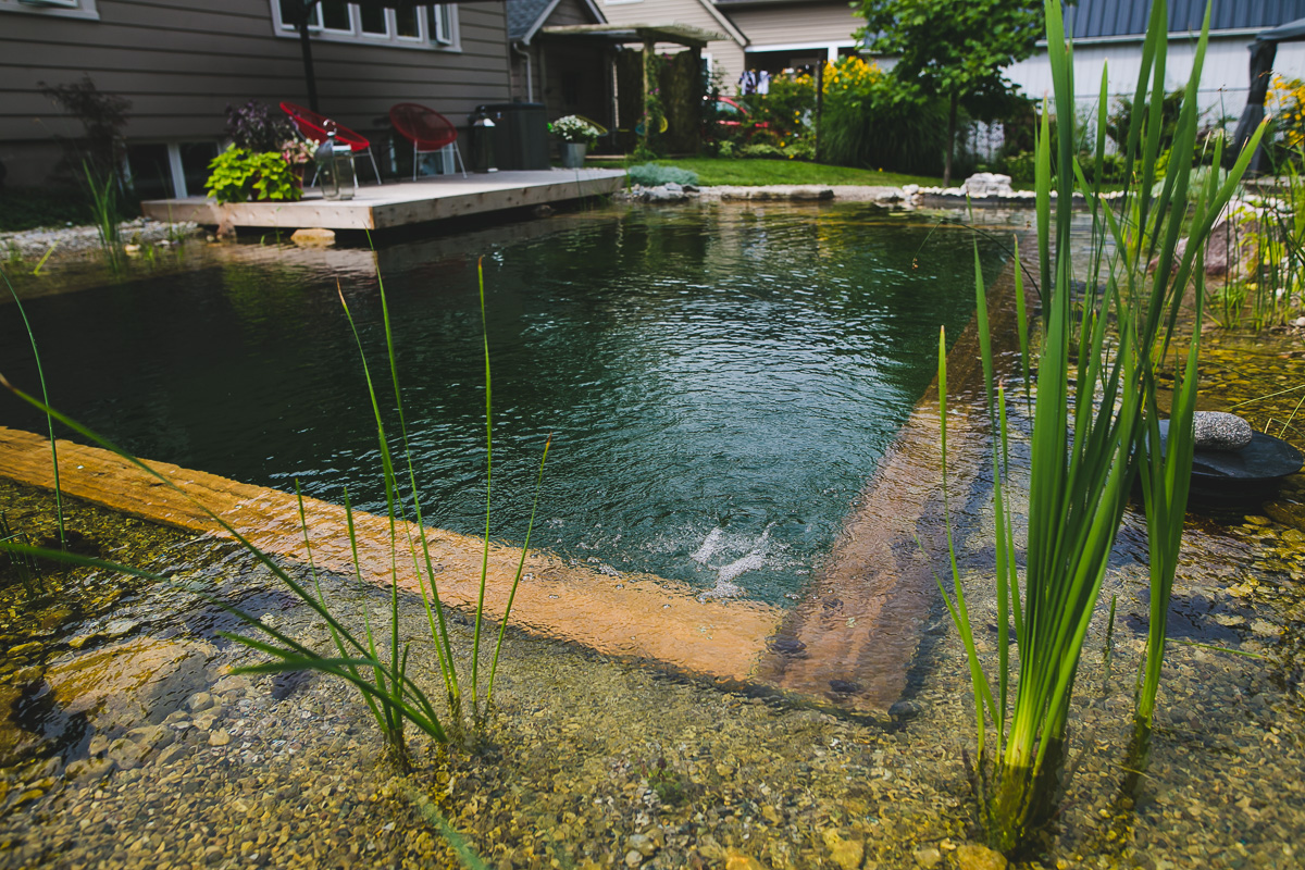 How Do Natural Swimming Pools Work? | Passion Pool & Pond