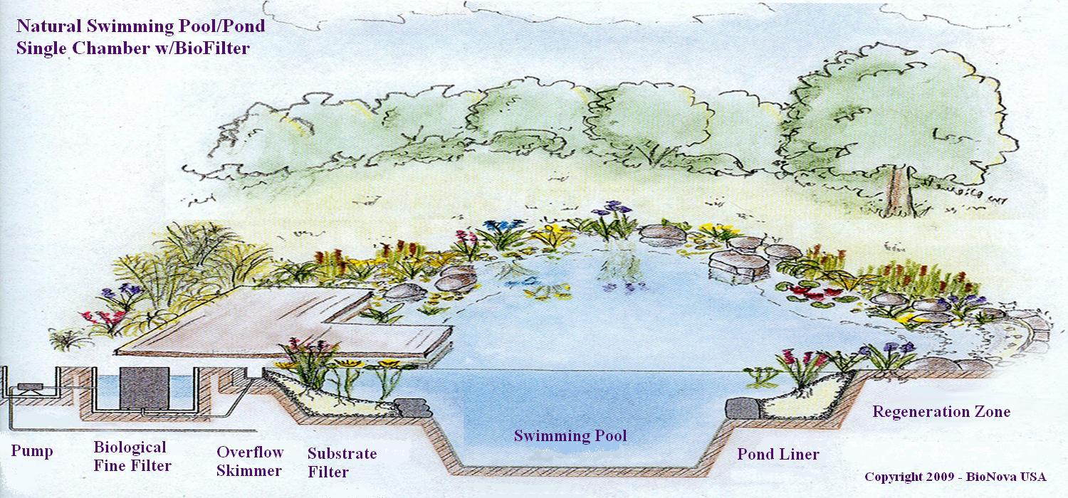 How A Natural Pool Filters