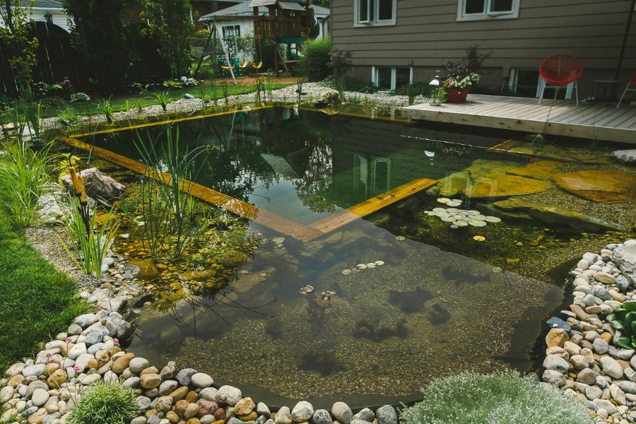 Passion pool pond gallery pool pond and stone for Pond swimming pool